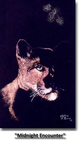 """Midnight Encounter"", cougar, coloured pencil"