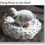 Piping Plover on her nest, small ceramic scculpture